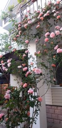Гостевой дом «Мария» в центре Анапы